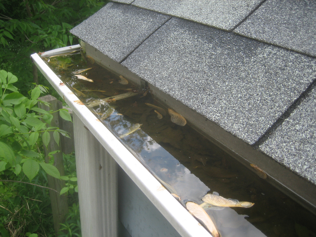 clean your dirty gutters